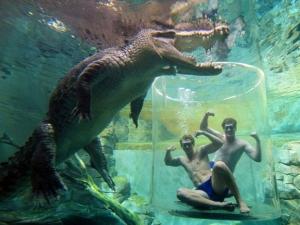 croc-extreme-01
