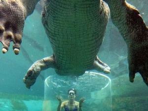 croc-extreme-10