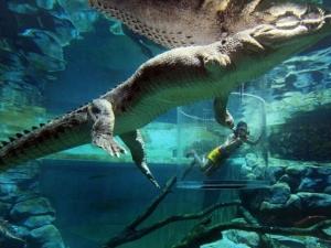 croc-extreme-13