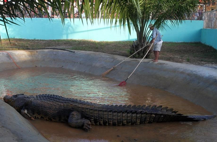 как ловили самого большого крокодила видео