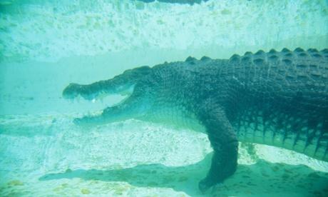 американский морской крокодил