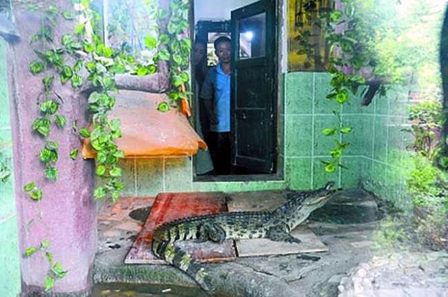 крокодил в китае