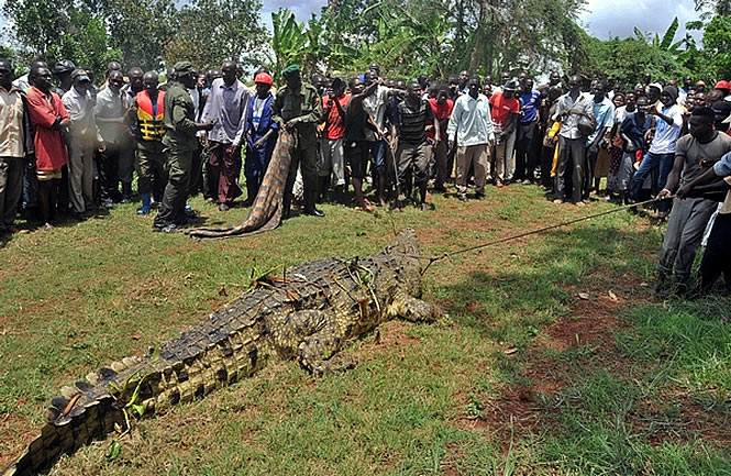 croc-uganda