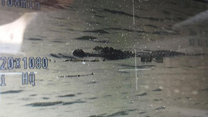 останки человека в пасти у аллигатора