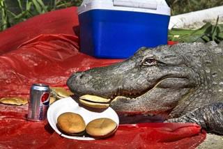 пикник с аллигатором