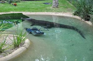 В Австралии крокодил отобрал у работника зоопарка газонокосилку