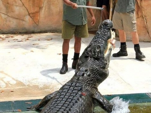 croc-extreme-06