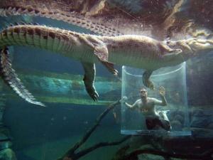 croc-extreme-12