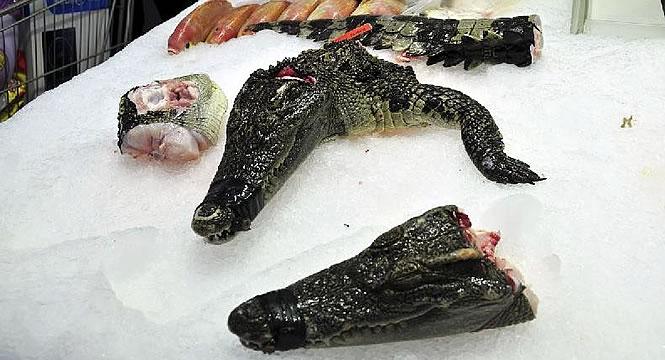 croc-meat