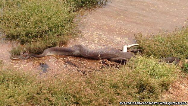 croc-snake-3
