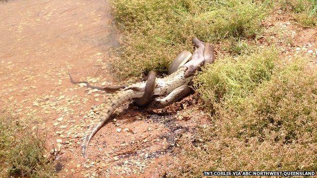 croc-snake