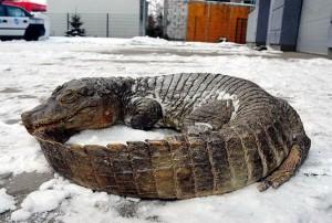умер крокодил в крыму