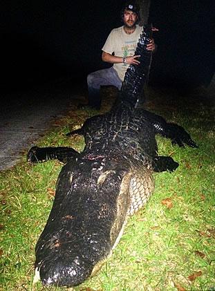 огромный аллигатор убит во флориде