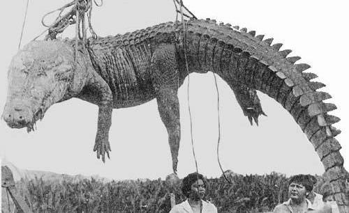 крокодилы острова Рамри